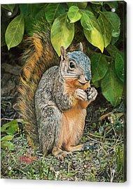 Squirrel Under Bush Acrylic Print