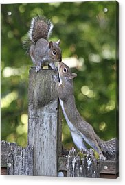 Squirrelly Affection Acrylic Print by Angie Vogel