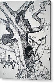 Squirrels And Bird Acrylic Print by Tammera Malicki-Wong