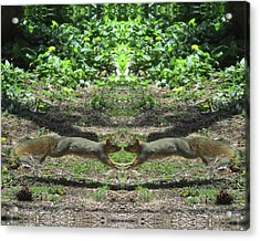 Squirrels Coming Together For A Kiss Acrylic Print