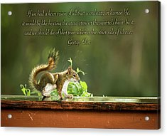Acrylic Print featuring the photograph Squirrel's Heart Beat-george Eliot by Onyonet  Photo Studios