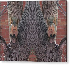 Squirrels In A Tree With Hands On Their Hearts Acrylic Print