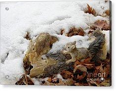 Squirrels In Winter Acrylic Print by Bill Hyde