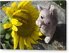 Squirrels Like Sun Flowers Acrylic Print by Tara Lynn