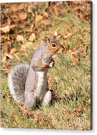 Acrylic Print featuring the photograph Squirrely Me by Debbie Stahre