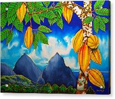 St. Lucia Cocoa Acrylic Print by Daniel Jean-Baptiste