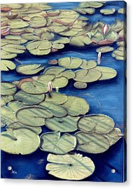 St. Marks Waterlilies Acrylic Print by Jan Amiss