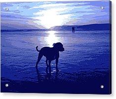 Staffordshire Bull Terrier On Beach Acrylic Print