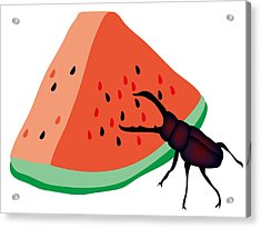 Stag Beetle Is Eating A Piece Of Red Watermelon Acrylic Print