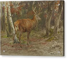 Stag On The Watch Acrylic Print