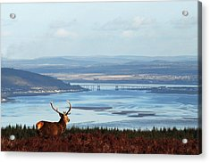Stag Overlooking The Beauly Firth And Inverness Acrylic Print