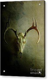 Acrylic Print featuring the photograph Stag Skull by Stephanie Frey