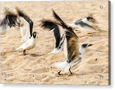 Stages Of Flight Acrylic Print