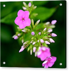 Acrylic Print featuring the photograph Stages Of Spring by Corinne Rhode