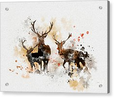 Stags Acrylic Print