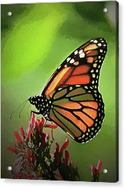 Stained Glass Butterfly Acrylic Print by Penny Lisowski