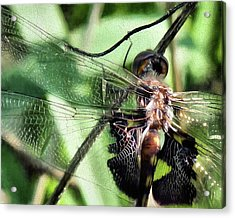 Acrylic Print featuring the digital art Stained Glass Dragonfly by JC Findley