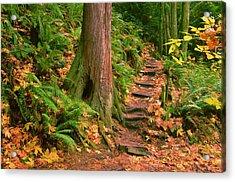 Stairway Forgotten Acrylic Print by Robert Evans