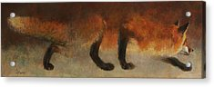 Stalking Fox Acrylic Print