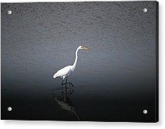 Stalking Acrylic Print by John Roncinske