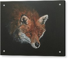 Red Fox In Stalking Mode Acrylic Print