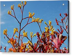 Stalks Of Color Acrylic Print by Jean Booth