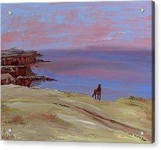 Stallion At Dingle Bay Acrylic Print by Cathy France