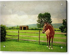 Acrylic Print featuring the photograph Stallion At Fence by Diana Angstadt