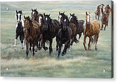 Stampede Acrylic Print by JQ Licensing