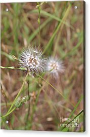 Acrylic Print featuring the photograph Stand Back by Marie Neder