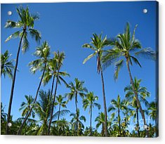 Stand Of Palms Acrylic Print
