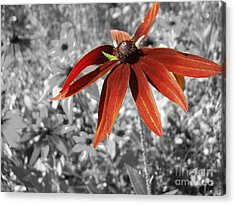 Stand Out  Acrylic Print by Cathy  Beharriell