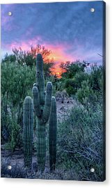 Stand Up And Be Counted Acrylic Print