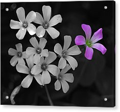Acrylic Print featuring the photograph Stand Up Stand Out by Maggy Marsh