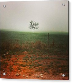 Standing Alone, A Lone Tree In The Fog. Acrylic Print