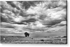 Acrylic Print featuring the photograph Standing Alone by Monte Stevens