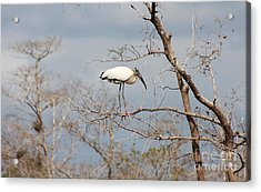 Standing On A Twig Acrylic Print by Christiane Schulze Art And Photography
