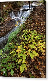 Acrylic Print featuring the photograph Standing On The Edge by Dale Kincaid