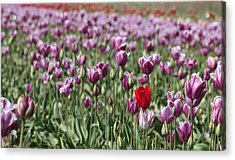 Standing Out In A Crowd Acrylic Print by Nick Gustafson