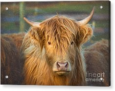 Standing Out In The Herd Acrylic Print