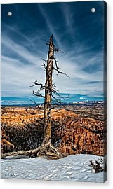 Standing Regardless Acrylic Print by Christopher Holmes