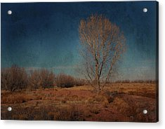 Acrylic Print featuring the photograph Standing Solo by Barbara Manis
