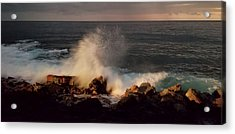 Acrylic Print featuring the photograph Standing Strong by Pamela Walton