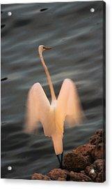 Acrylic Print featuring the photograph Standing Tall by Carol Kinkead