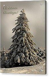 Standing Tall Christmas Card Acrylic Print by Lois Bryan