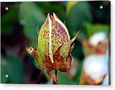 Acrylic Print featuring the photograph Standing Tall by KayeCee Spain