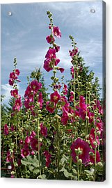 Standing Tall Acrylic Print by Lisa Patti Konkol