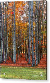 Standing Tall On The Natchez Trace Acrylic Print