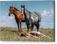 Standing Watch Over The Foals Acrylic Print
