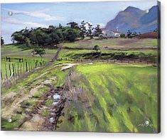 Stanford Harvest Acrylic Print